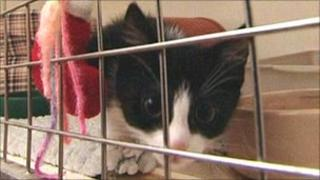 Kitten in cage at the home.