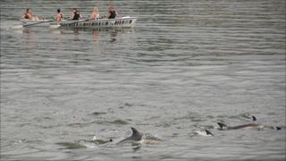 Fishguard Ladies Long Boat Team with the dolphins