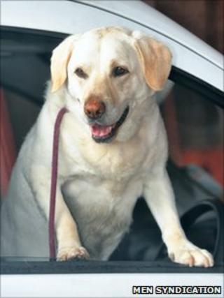 Echo the rescue dog