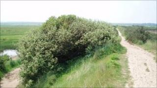 The sea wall footpath at Burnham Overy Staithe