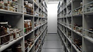 Storage shelves at the Smithsonian