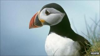 Puffin [Pic: RSPB]