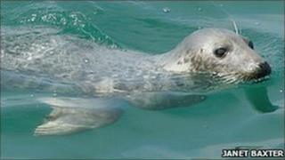 Seal (Pic: Janet Baxter)