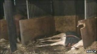 Spindle Farm horses