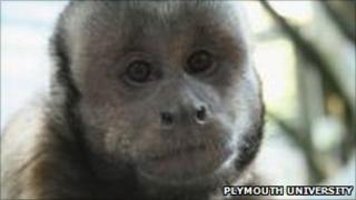 Kodak - Capuchin Monkey