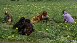 Farmers in Pakistan