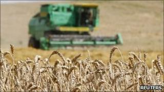 A grain combine harvester reaps wheat
