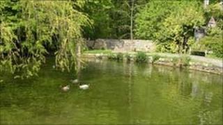 Fonmon pond in better days (Photo: David Howell)