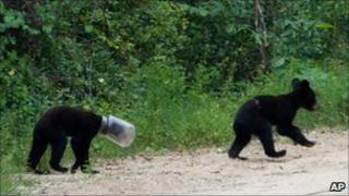Cub with jar on head - 31 July 2010