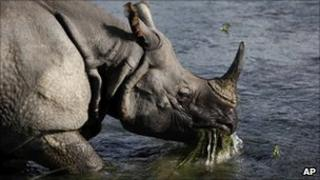 A one horn rhino in Nepal's Chitwan National Park on 1 August 2010