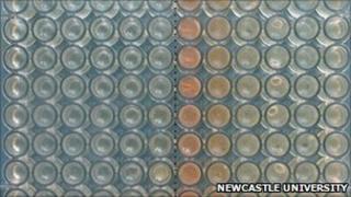 Vials of bacterial culture (Newcastle Uni)