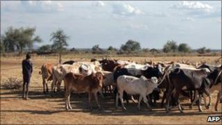 A young Karamojong villager keeps a close eye on a herd of cattle in Uganda (Archive photo 2007)