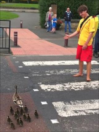 Ducks crossing