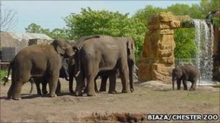 A herd of elephants at Chester Zoo Pic: Biaza/Chester Zoo