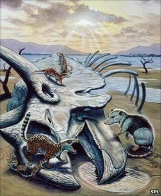 Mammals and dinosaur remains (SPL)