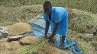 Rice farmer in Malawi