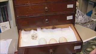 Seized egg cabinet