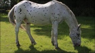 Olly the horse
