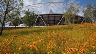 Wild flower Olympic meadow