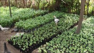 Tree planting project in Uganda