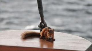 Red squirrel on wildlife cruise. Pic: The Majestic Line