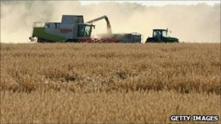 Rye harvest in Mahlow, Germany - file pic