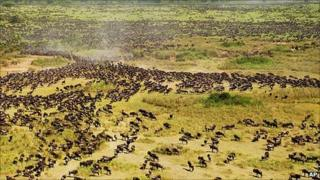 Archive photo of wildlife roaming in the Serengeti National Park - photo from the Wildlife Conservation Society