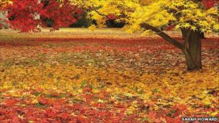 Library picture of a carpet of leaves at Westonbirt (Image: Sarah Howard)