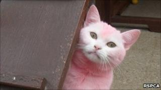 Cat with dyed pink fur