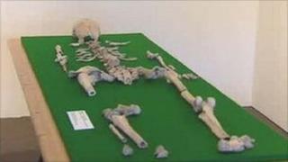 Blodwen's skeleton