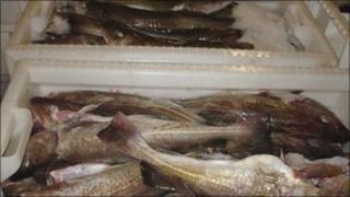 fish at Lerwick port