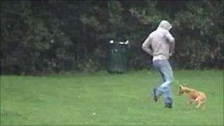 Man kicks dog