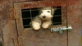 A dog in a cage