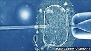 A human egg being pierced by a needle containing a single sperm as part of IVF treatment