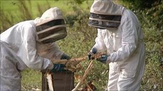 Beekeepers at site of attack