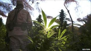 A soldier stands among marijuana plants in Valle de Trinidad, Mexico