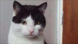Merlin the cat who was tormented in a sick attack near his home in Craven Arms, Shropshire