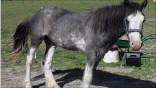 Rascal, the horse found dead in a field in Alfriston with multiple injuries