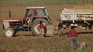 Farm workers generic