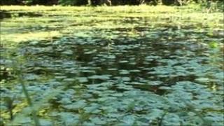 Floating Pennywort plants blocking river