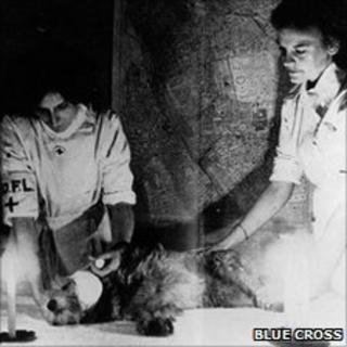 Blue Cross staff working on an injured animal