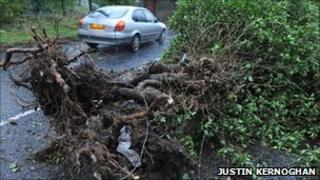 A fallen tree has blocked the Hannahstown Hill road in Belfast