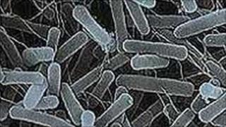 Gastroenteritis bug