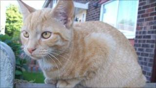 Marmalade, the ginger cat
