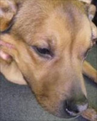 Dog abandoned in woods in Cambridge