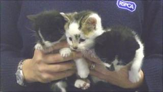 Abandoned kittens. Picture from the RSPCA