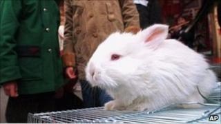 A rabbit on sale in a market in Shanghai