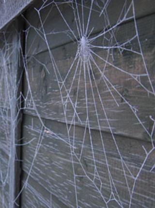 Frozen cobwebs in Inverness