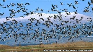 Cranes. Photo by Dror Galili