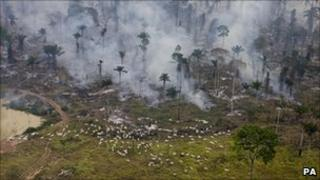 Man made fires to clear the land for cattle or crops in Sao Felix Do Xingu Municipality, Para, Brazil - June 2009